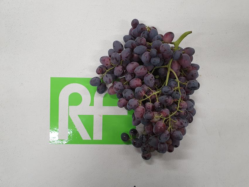 readyfrutta